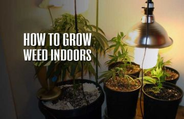 How-to-grow-weed-indoors