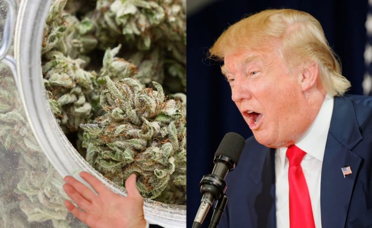 Trump Against Marijuana