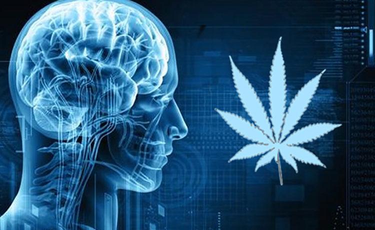 cannabis on the mind